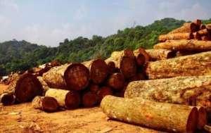 中国从缅甸进口木材90%以上通过云南陆路口岸进口阿尔山